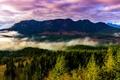 Картинка лес, деревья, пейзаж, горы, туман, США, штат Орегон