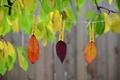 Картинка осень, краски, веревка, природа, прищепка, листья