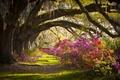 Картинка лето, деревья, пейзаж, цветы, природа, красота, внточки
