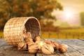 Картинка солнце, стол, Осень, орехи, лукошко