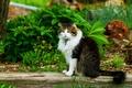 Картинка лето, сидит, кошка, зелень, кот