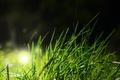 Картинка трава, зеленый