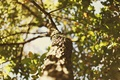 Картинка широкоэкранные, листочки, HD wallpapers, обои, листья, дерево, полноэкранные, солнце, background, ветки, fullscreen, макро, leave, широкоформатные, ...