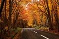 Картинка дорога, пейзаж, лес