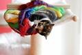 Картинка кошка, животное, шарф, лежит, играет