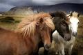Картинка поле, трава, горы, природа, шерсть, лошади, пастбище, грива, окрас