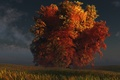 Картинка дерево, digital, трава, осень, red and gold