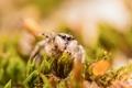 Картинка природа, трава, паук