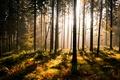 Картинка зелень, лес, деревья, папоротник, солнечные лучи