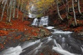 Картинка осень, лес, природа, река