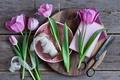 Картинка ножницы, Pink, тюльпаны