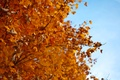 Картинка Осень , дерево , листья , красный
