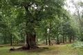 Картинка Nature, зелень, trees, summer, green, лето, деревья