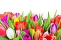 Картинка colorful, flowers, tulips, тюльпаны