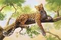 Картинка леопард, живопись, дерево, olggah, art