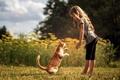 Картинка дружба, друзья, кошка, девочка, кот
