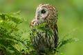 Картинка природа, лес, птица, сова