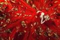Картинка листья, девушка, лицо, красное, платье, лежит
