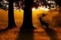 Картинка природа, рассвет, лес, олень