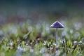 Картинка Гриб, трава, зеленый