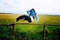 Картинка труселя, поле, Прыжок