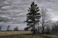 Картинка Дерево, пасмурно, облака