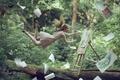 Картинка девушка, левитация, художник, фантазия-арт, лес, картины