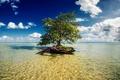 Картинка море, дерево, Mexico, Mayan Riviera