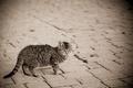 Картинка кошка, улица, в полоску, серый, мостовая, котенок