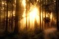 Картинка Misty Forest-2, обработка, лес
