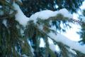 Картинка снег, елка, новый год, Зима, ель