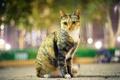 Картинка кошка, взгляд, огни, парк, вечер, облики, город