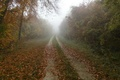 Картинка Осень, туман, leaves, nature, fall, autumn, path, листва, fog, дорожка