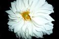 Картинка цветы, природа, флора, растения