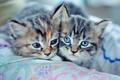 Картинка котята, kitty, cat