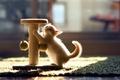 Картинка кошка, котенок, игра, Hannah, © Ben Torode