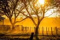 Картинка свет, деревья, ранчо, закат, солнечный свет