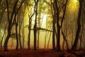 Картинка листья, осень, деревья, туман, парк, восход, утро