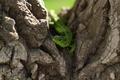 Картинка деревья, природа, Ящерицы