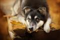 Картинка собака, взгляд, друг