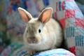 Картинка кролик, пушистый, заяц
