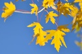 Картинка небо, ветка, осень, листья