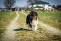 Картинка собака, трава, дом, путь, тень