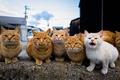Картинка семья, взгляд, коты, группа