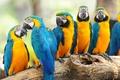 Картинка birds, птиц, parrots, trunk, багажник, попугаев