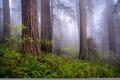 Картинка утро, природа, туман, весна, Redwoods, By Rob Macklin, Калифорния, лес, США