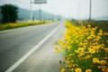 Картинка макро, roadside, жёлтые цветы, дорога