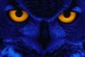 Картинка глаза, взгляд, синий, сова, птица, Yellow, Eyes, Owl