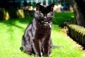 Картинка кот, взгляд, черный, сидит