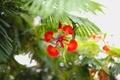 Картинка лепестки, цветок, красные